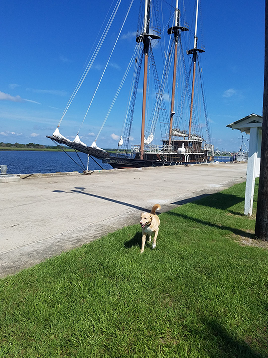 Brodi at the Bay