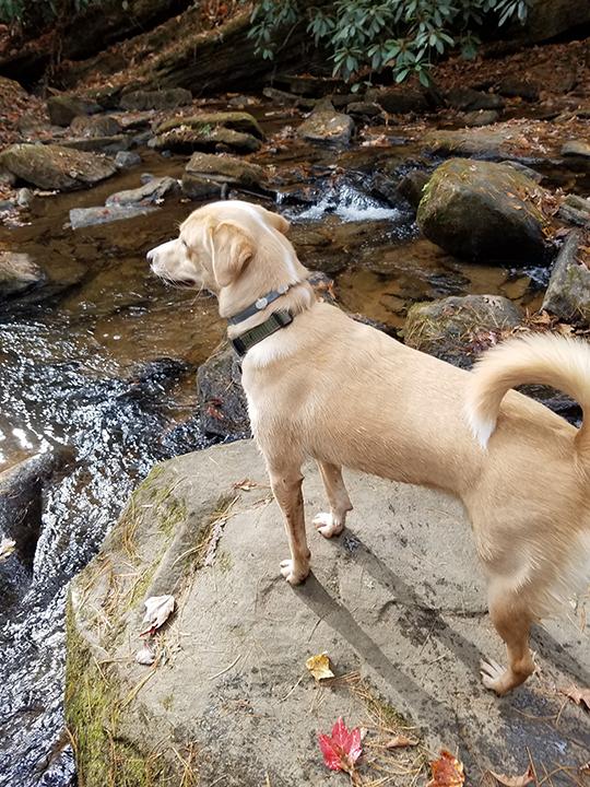 Brodi Contemplates Fishing