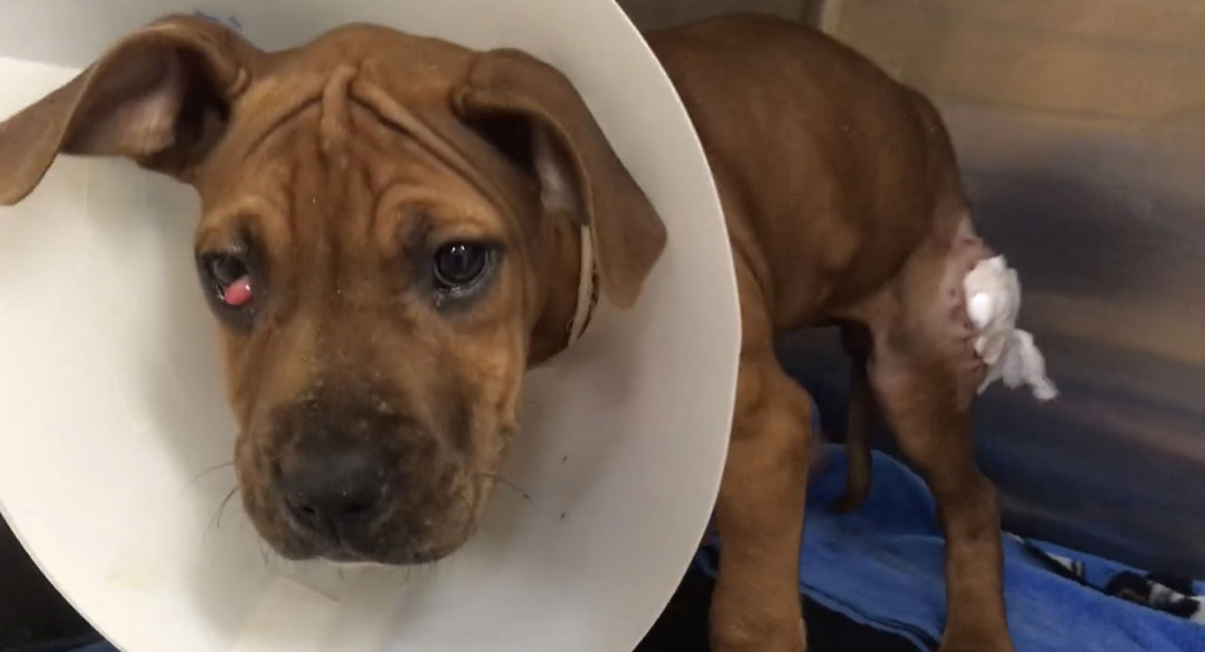 rosey-first-rescued.jpg