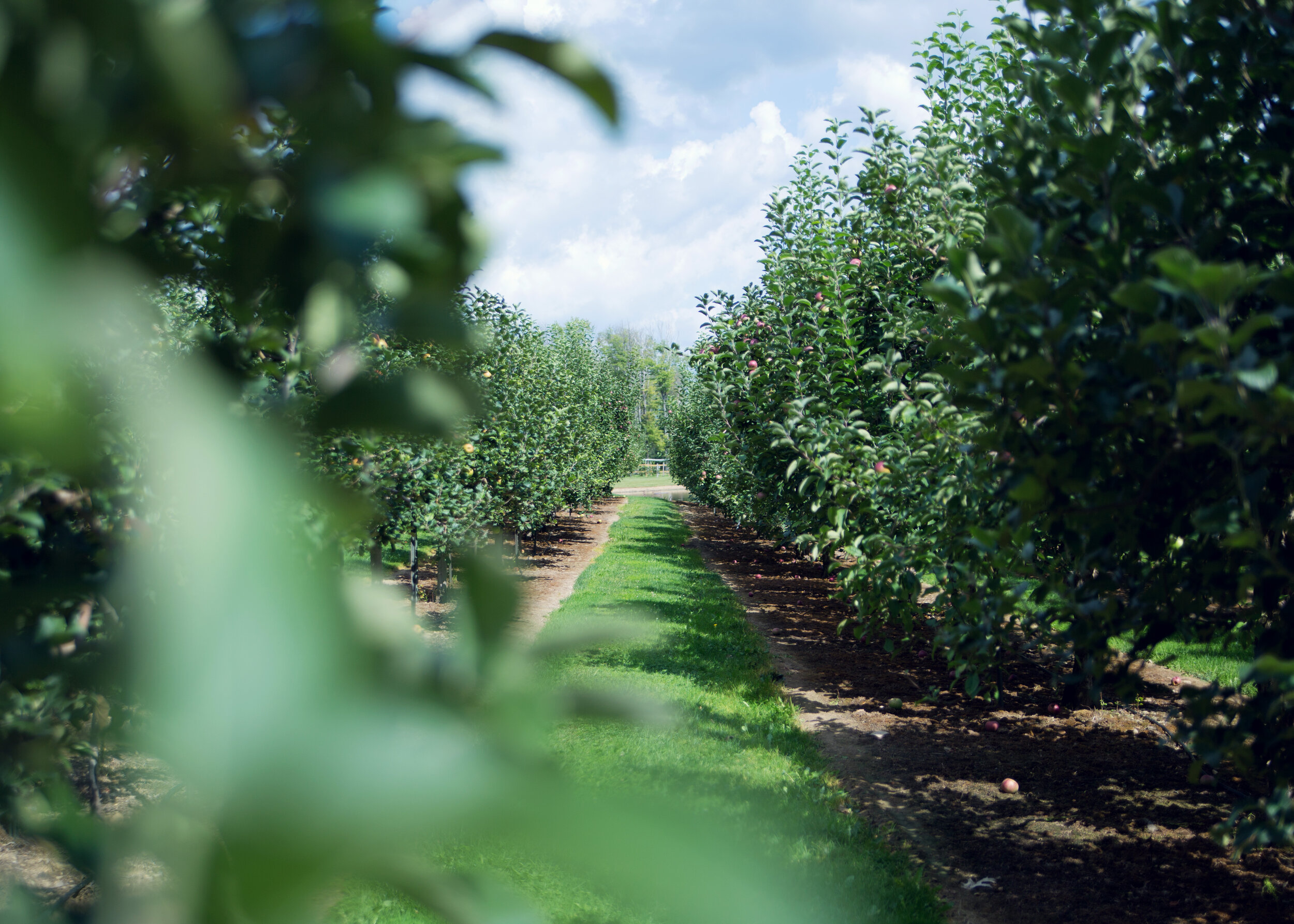 Davenport Apple Orchard | Kelly Rhoades Photography