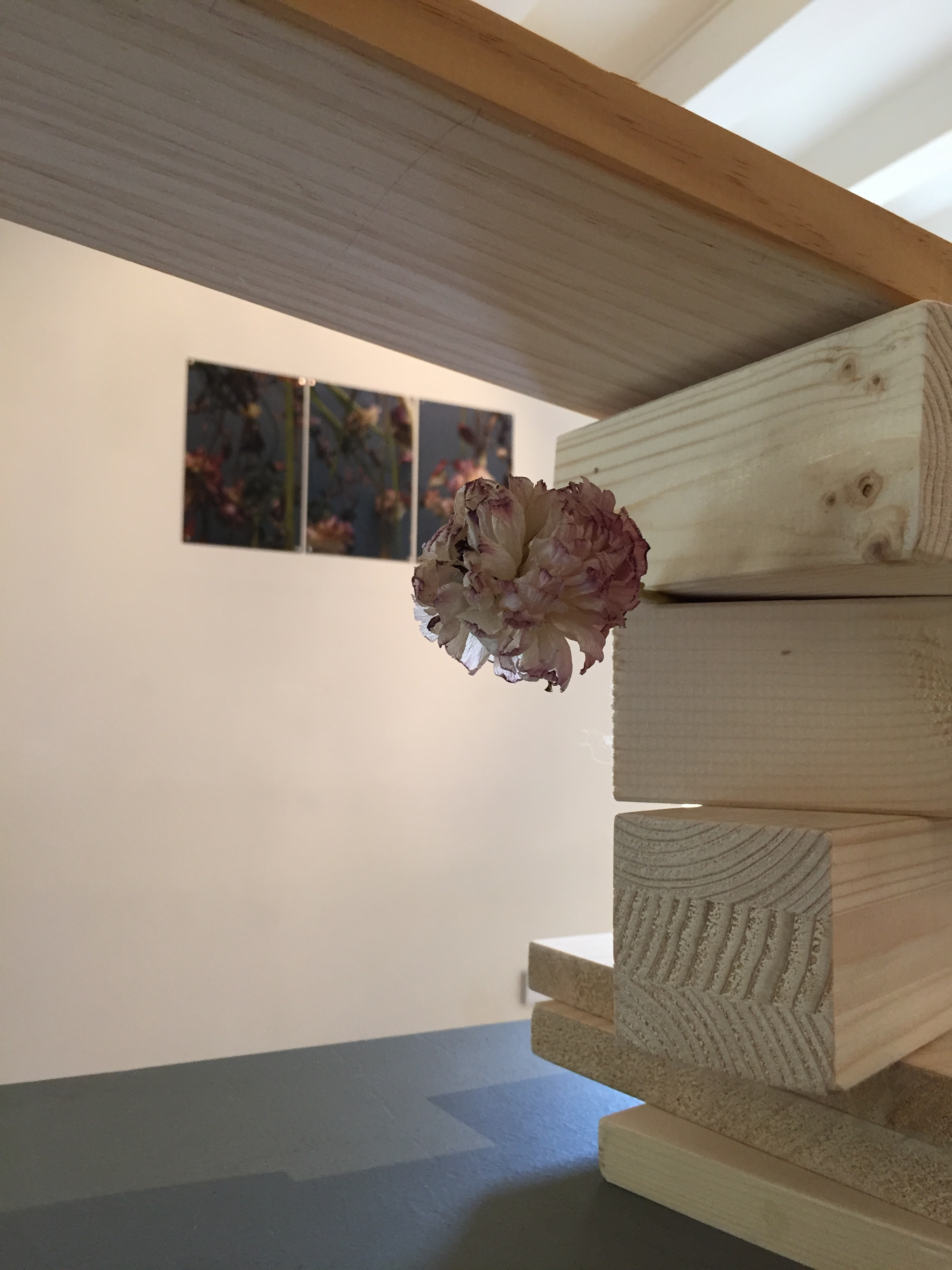 Endless Fragility  2018 / Installation with withered flowers, wood and botanical ink container · Variable sizes ·