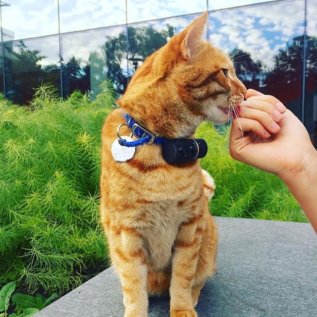 """Happy International Cat Day! 😻 We """"cat"""" even with these cute photos of Nestor, the #logancenter's adorable neighborhood kitty who roams the community garden looking for head scratches or a bug to play with (eat). 📸 by @thefinchery.  What on-campus cats are your favorite? . . . #catsofinstagram #uchicago #uchicagoarts #nestor #internationalcatday"""