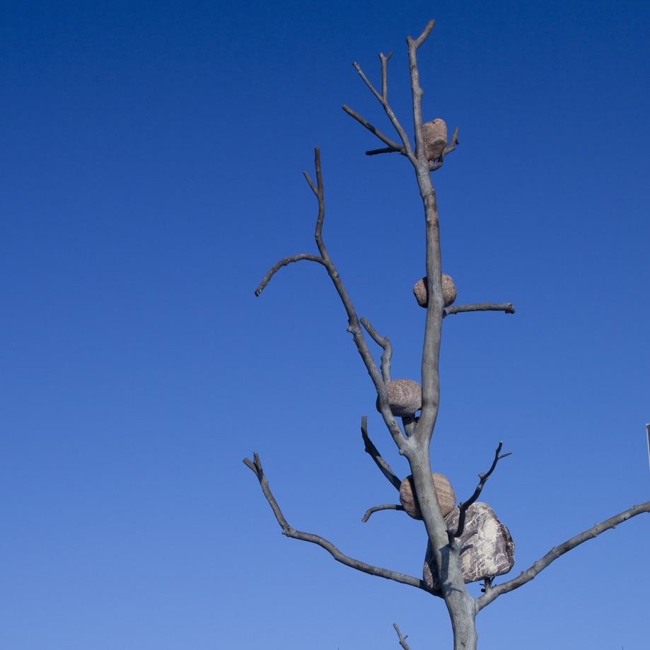 Penone tree sculpture.  Courtesy UChicago Booth School of Business.