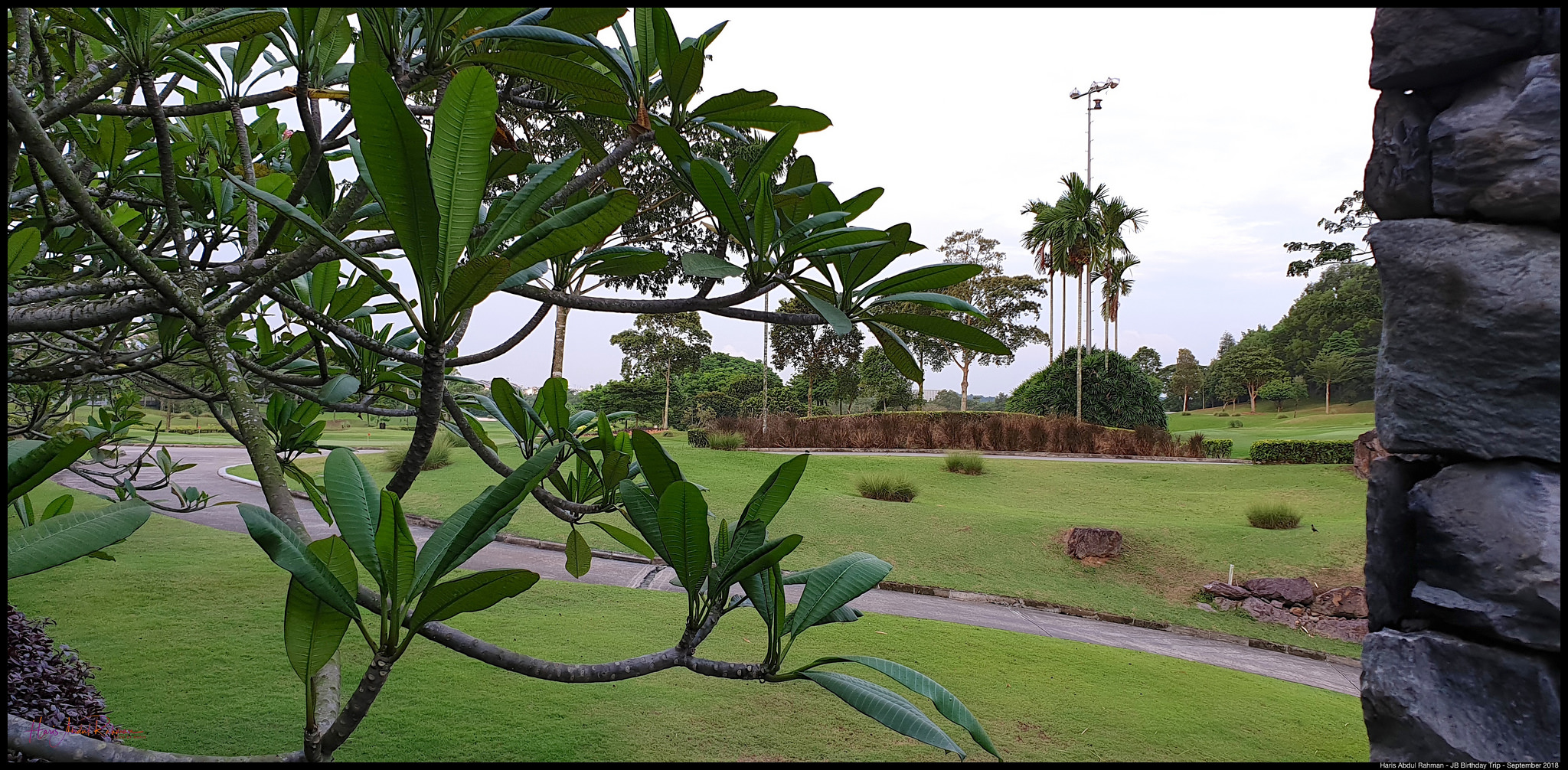 The greenery of the golf course