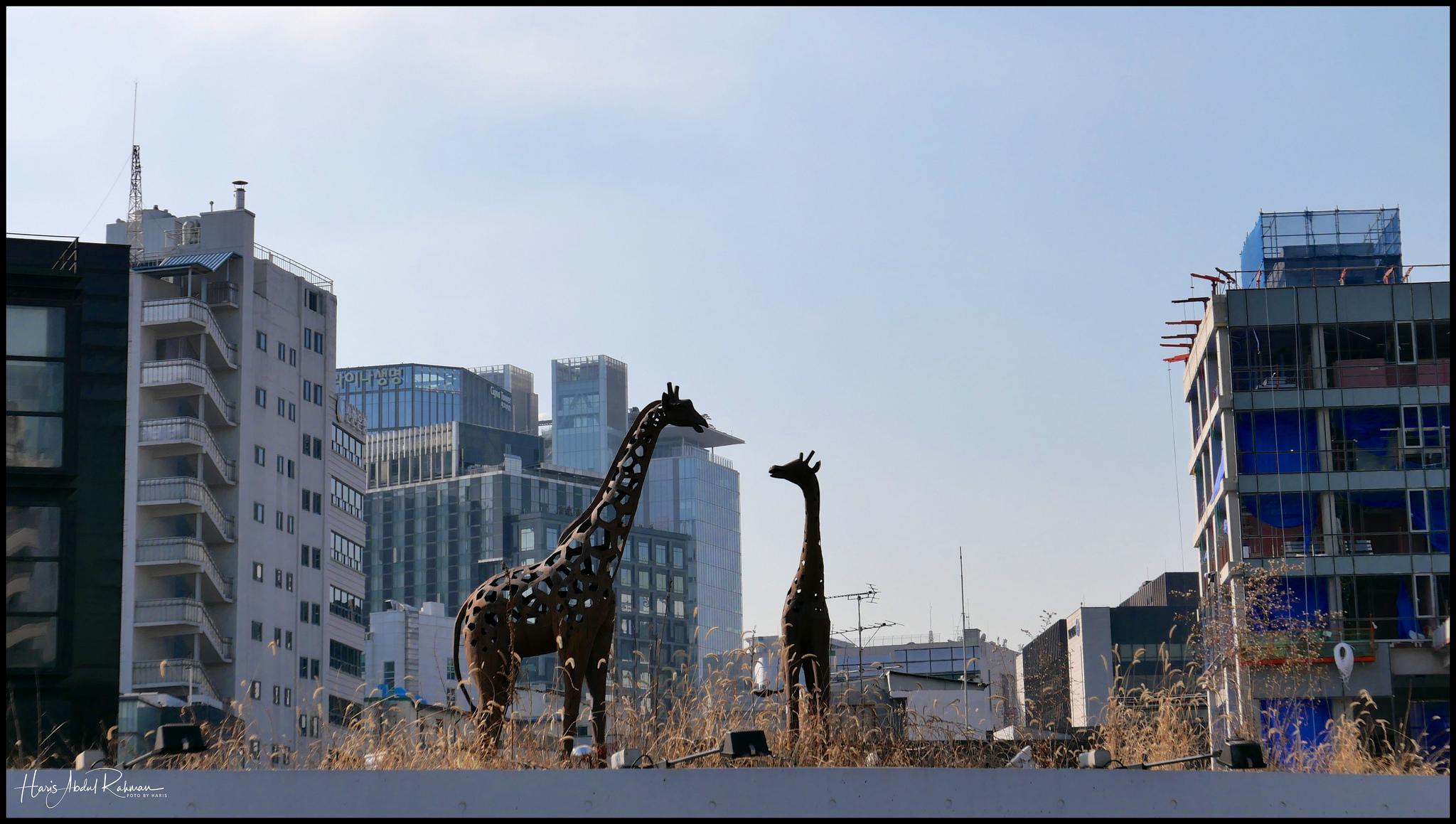 An urban safari at Ssamziegil