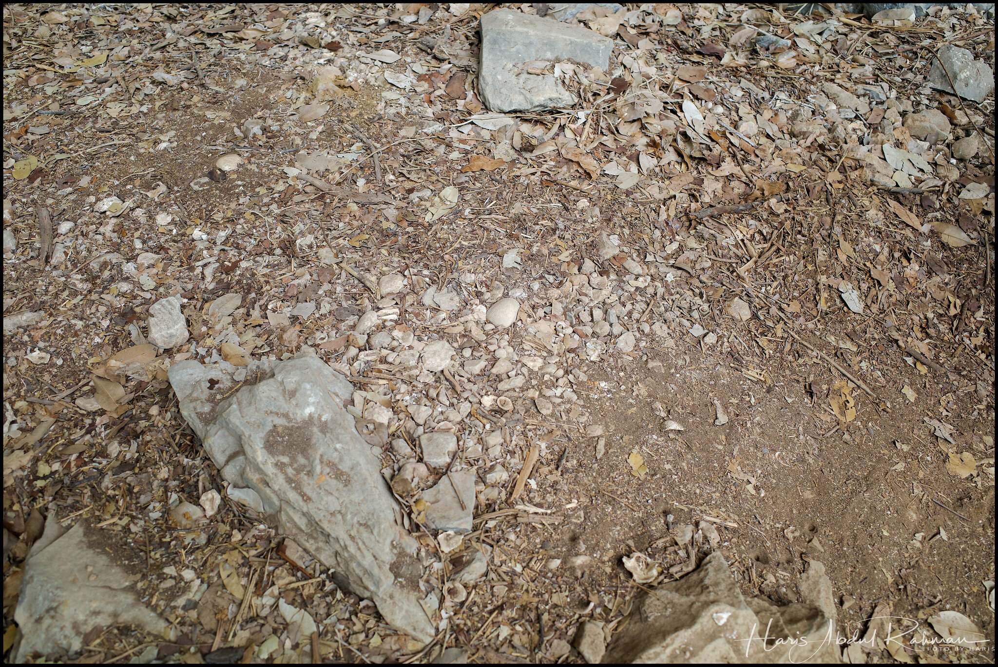 The floor was strewn with shells. It used to a beach here …