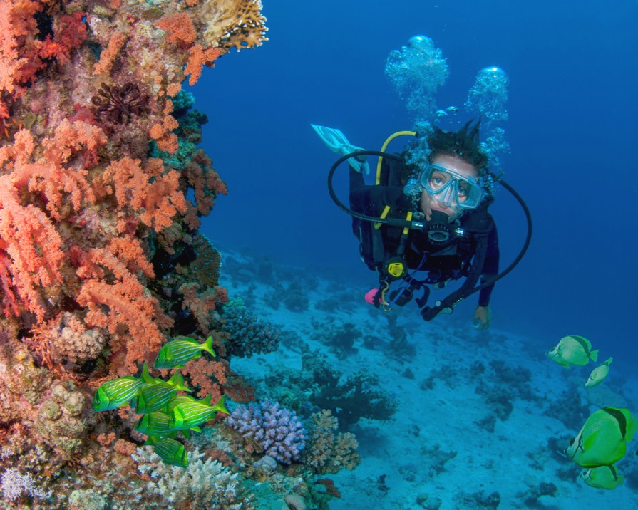 BUCEO -