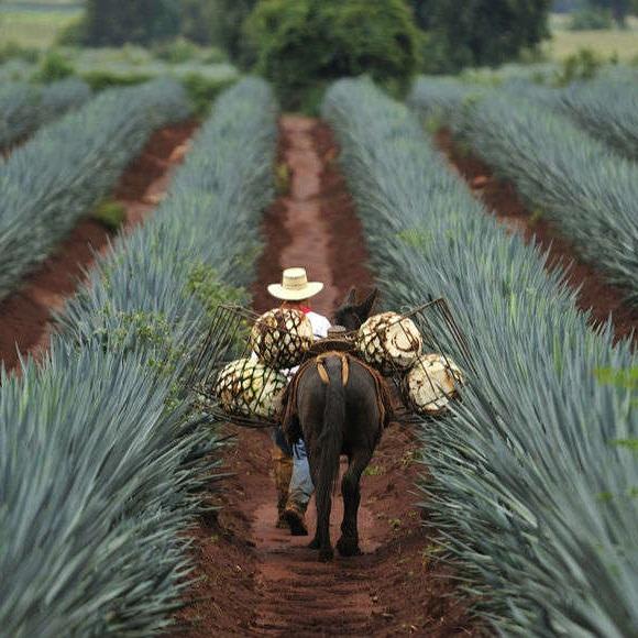 Tequila-Jalisco.jpg