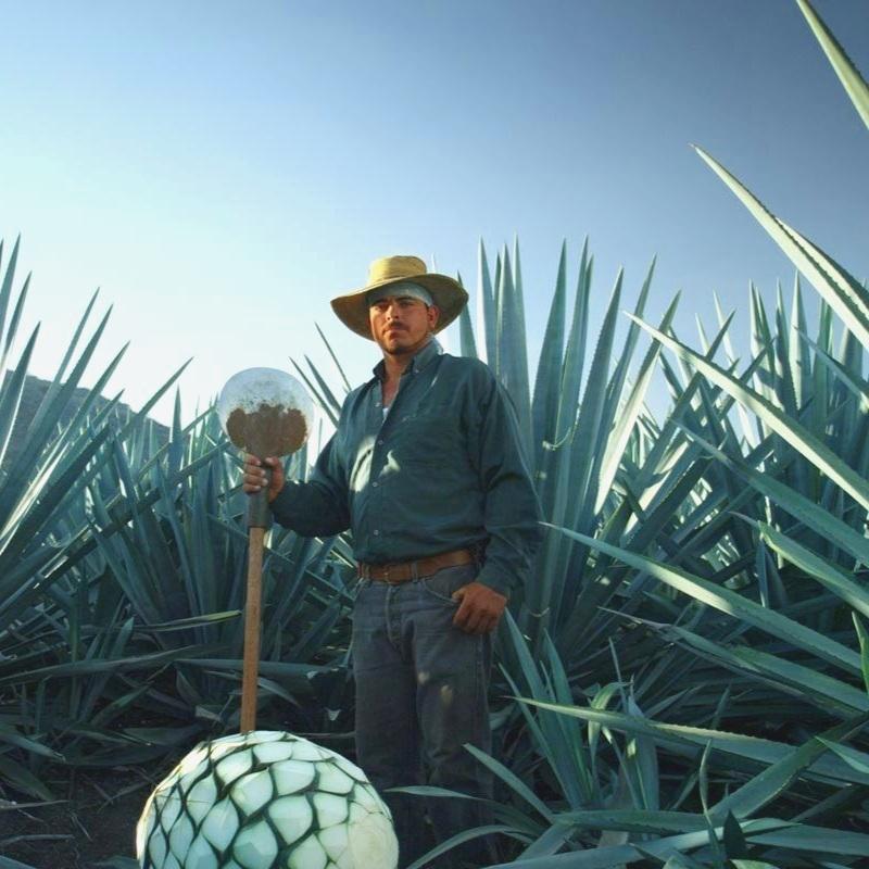 Ruta-Tequila-Mexico.jpg