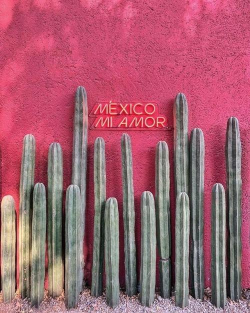Mexico-Mi-Amor.jpg