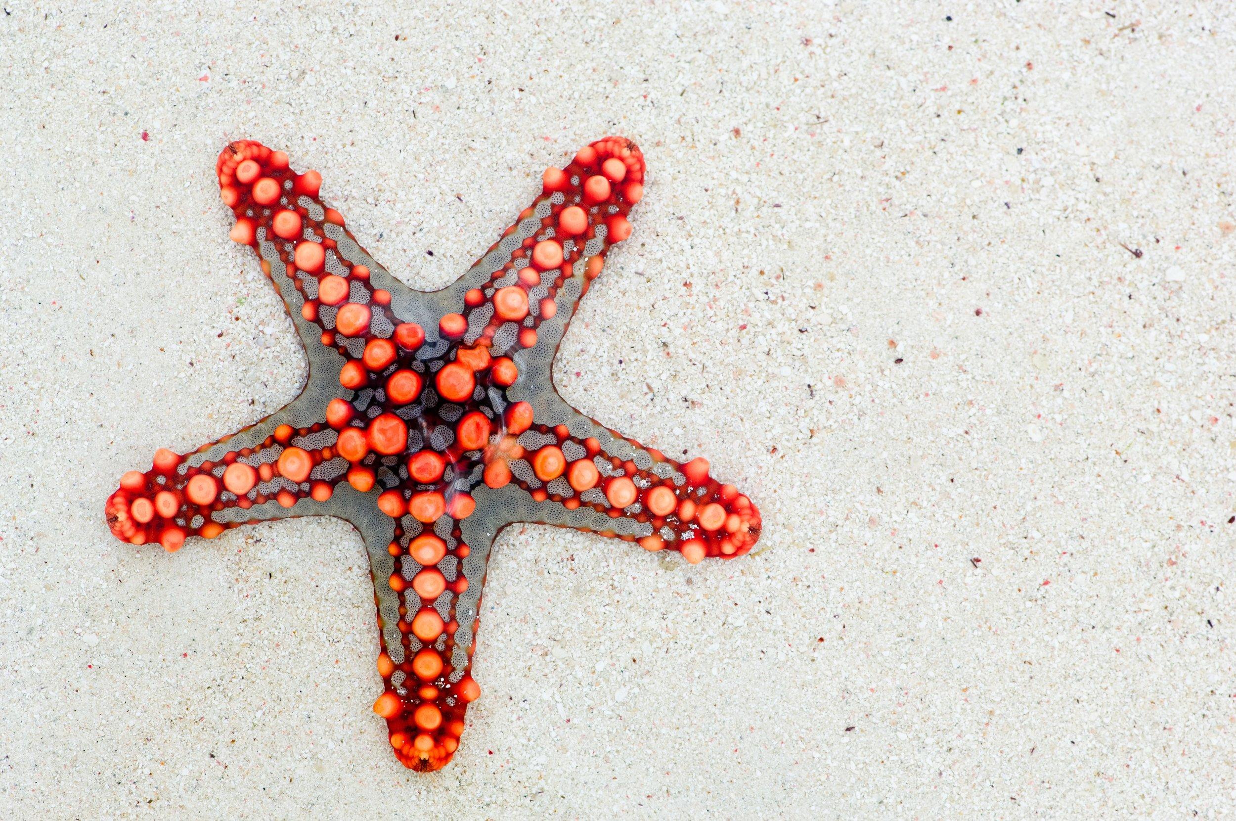 starfish-74535.jpg