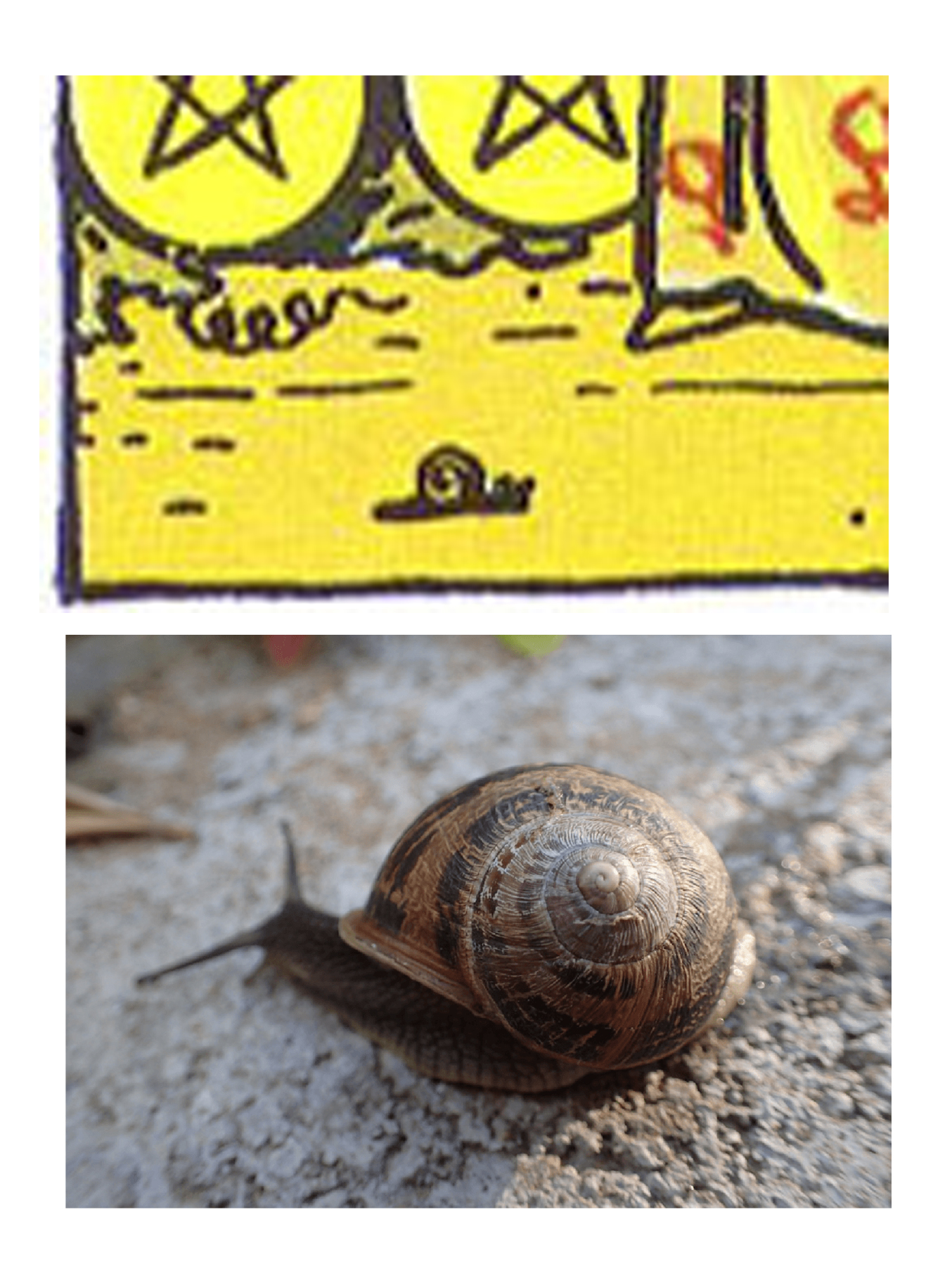 Much has been made of the snail on the 9 of Pentacles, which Marcus Katz and Tali Goodwin suggest is a symbol for self-sufficiency. Personally I'm always reminded of Jeremy the lonely left-twisting snail, whose idiosyncratic spiral kept him from finding a mate.