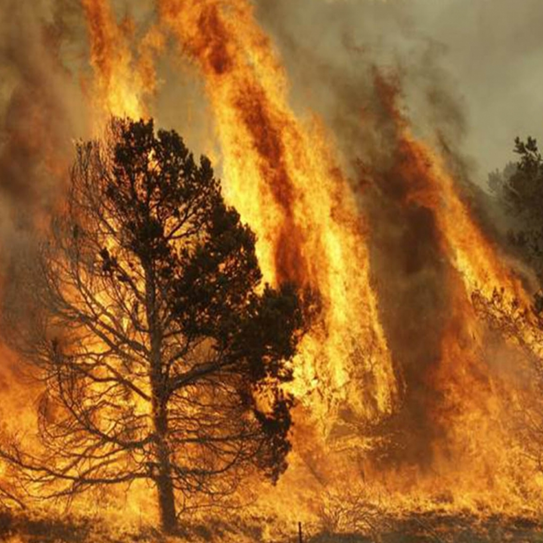 fire wind.jpg
