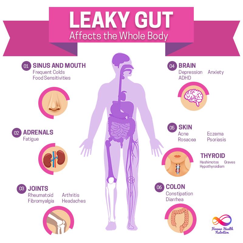 gut health forever health nutrition