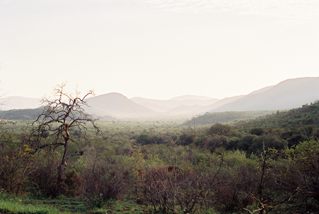 How To Realize A Real Safari At The Wonderful Pilanesberg National Park In South Africa