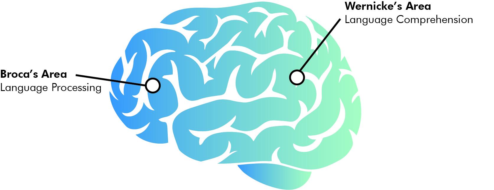 The brain's response to data.