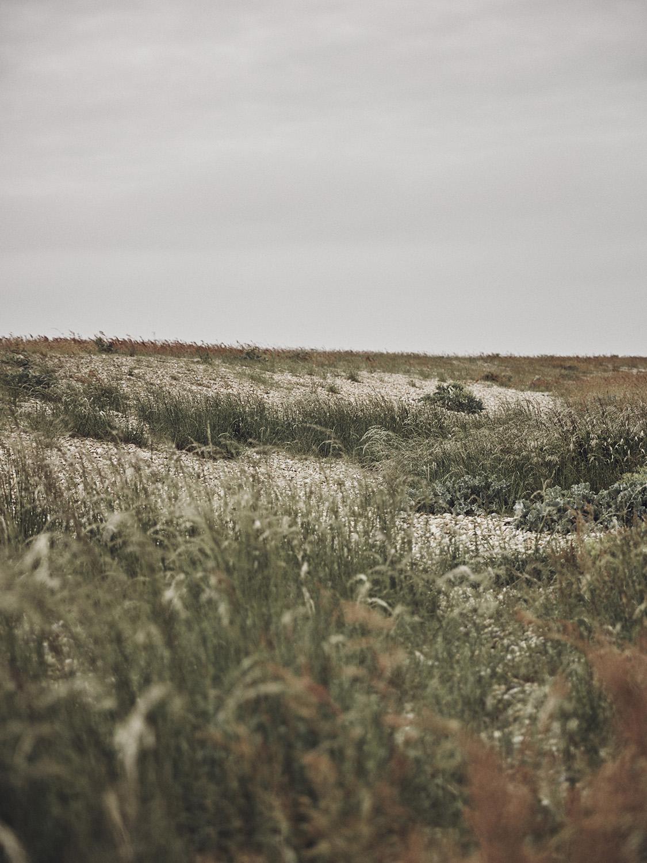 _LANDSCAPES-088.jpg