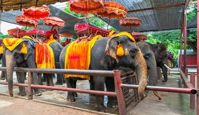 Det er sikkert fristende for alle som har lest Jorden rundt på 80 dager, men elefantene har det ikke bra. Sørg for at ditt selskap ikke bidrar til slikt.