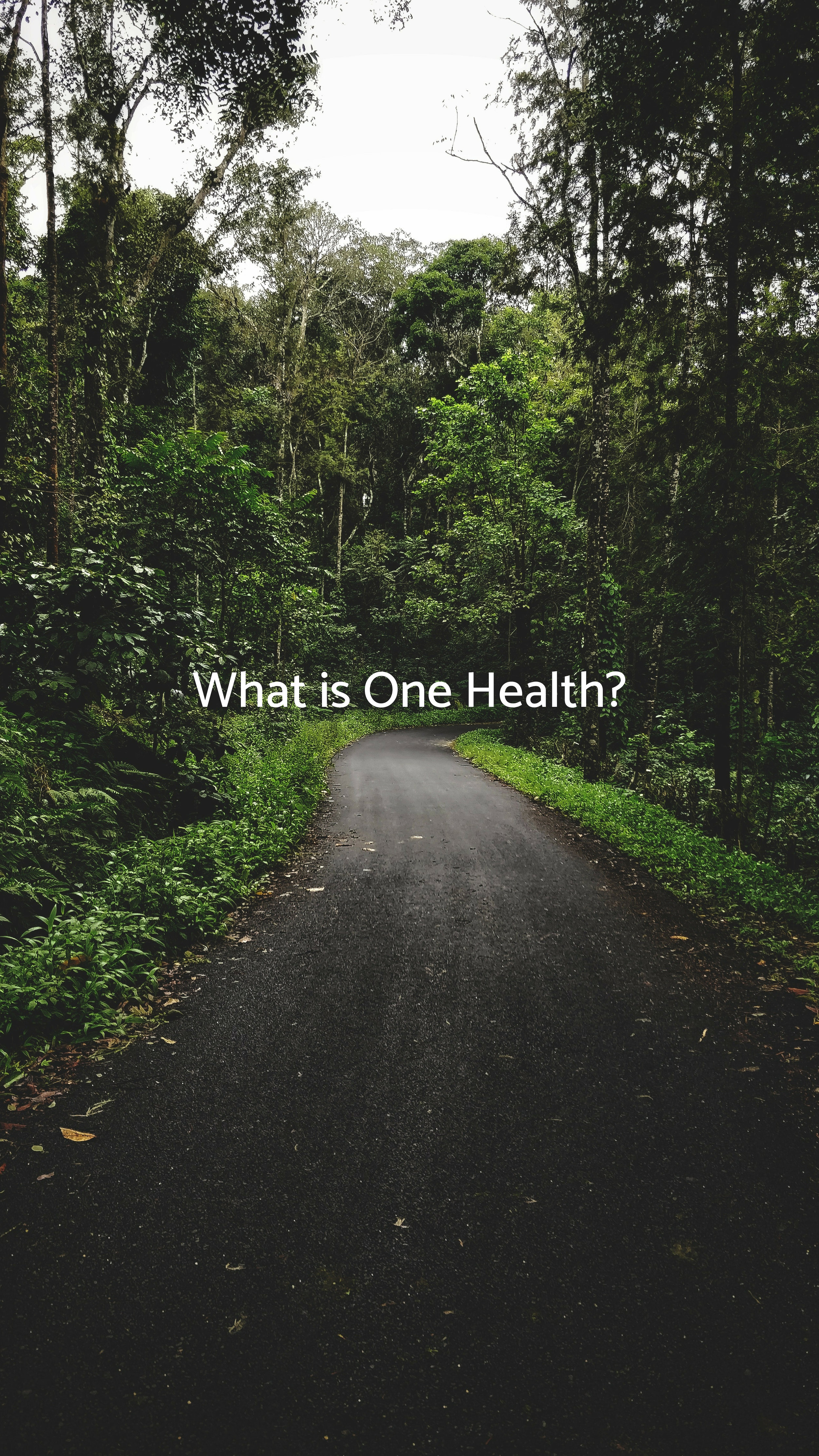 What is One Health?.jpg