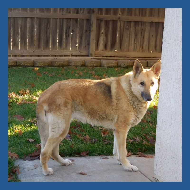 Minerva Rivera Daniel is a retired educator who enjoys spending time with family, friends, and her German Shepard Lola (pictured here).