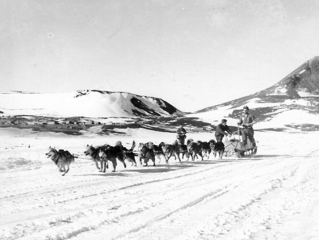 Sled dog teams were used for some transportation purposes by the U.S. Navy as shown in this 1956 photo, with Lieutenant junior grade Jack Tuck in command of this sled. This photo was taken on the annual sea ice near what is today known as McMurdo Station. Photo credit: US Navy, USAP Photo Library
