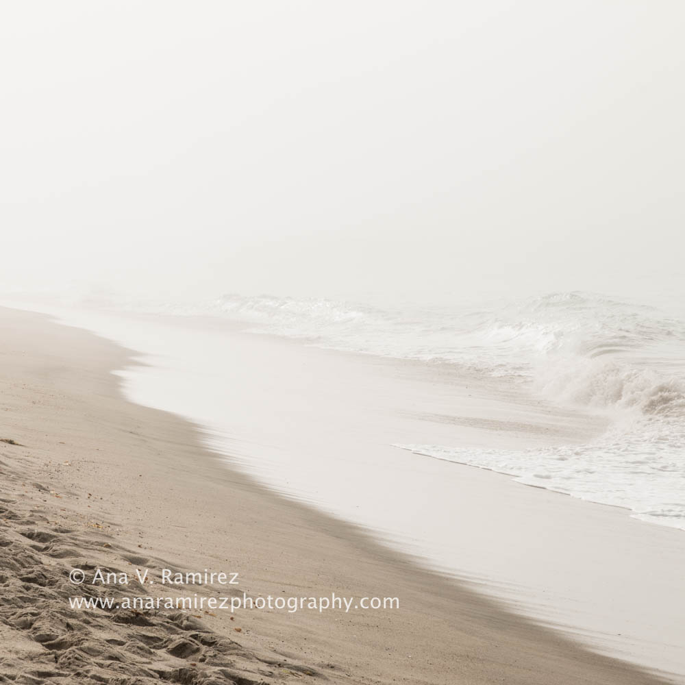 foggy morning at the beach
