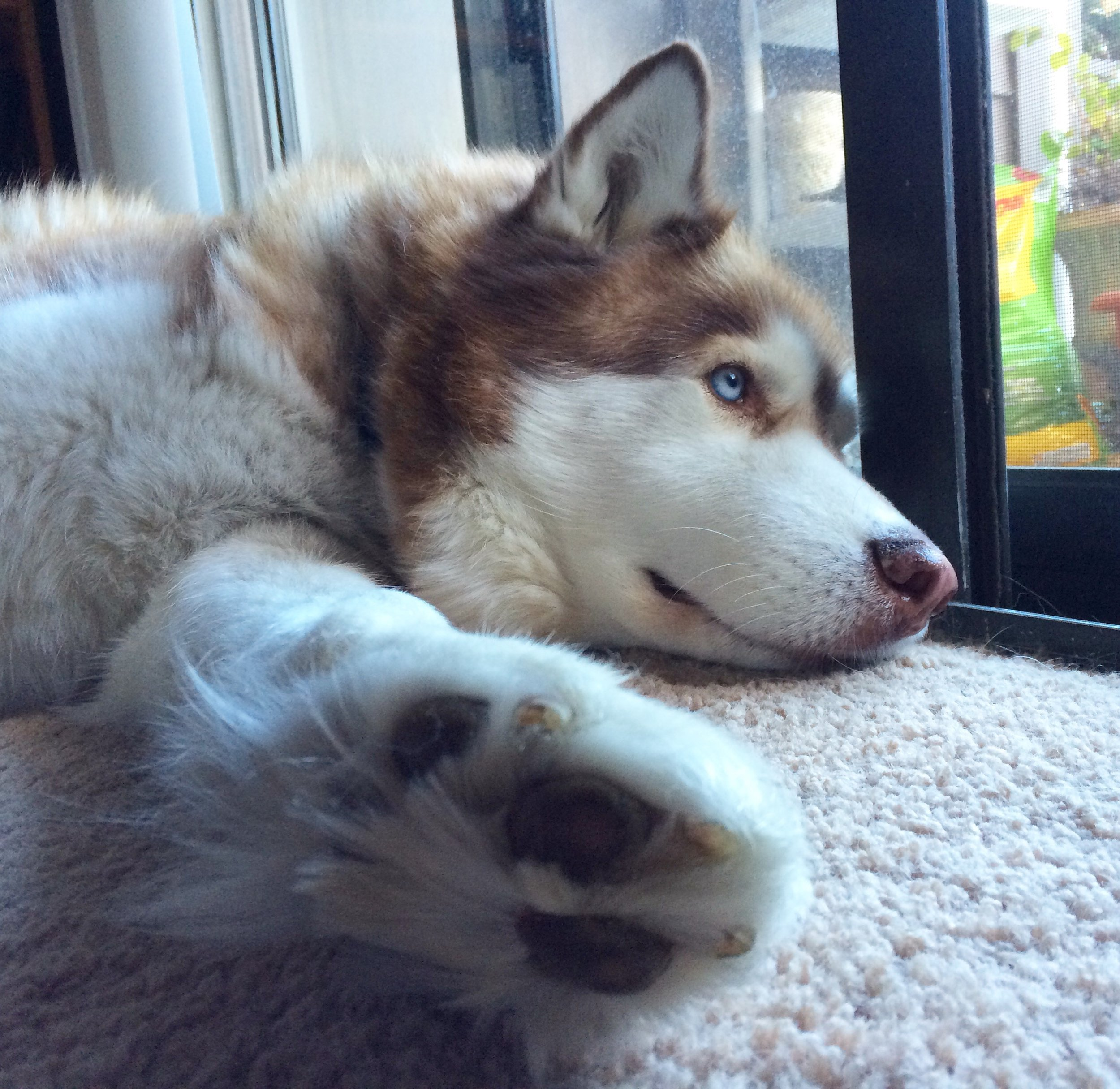 Deep in thought. Talk to the paw.