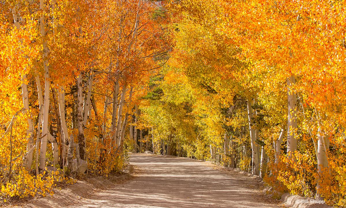 Autumn, North Lake Road