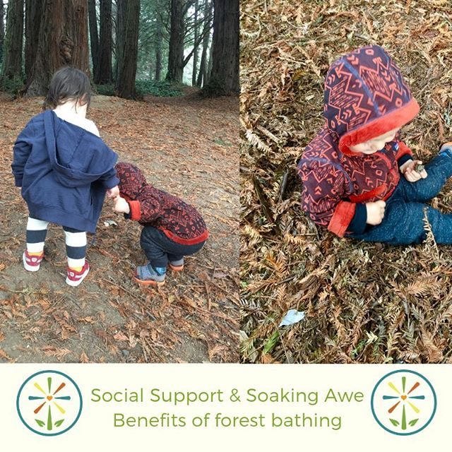 "Check out the picture of our students enjoying natures benefits. A few weeks ago parents and toddlers all practiced forest bathing in redwood grove. 🌞 Research confirms benefits of #forestbathing and a growing number of doctors are writing #natureprescription alongside of Rx! 🌲 Due to wildfires and very poor AQI I've been spending lots of time indoors and found an awesome article #timemagazine (11.19.18) on the benefits of forest bathing. 💚 ""Dr. Zarr is part of a growing movement to bring the outdoors into medicine. The physicians are encouraging their patients to get outdoors and take advantage of what many view as free medicine."" (J. Ducharme) 🌎 Studies Show Benefits of Going Outdoors👉🏽 1. Relaxation - decrease levels of hormone cortisol, lower blood pressure, reduces other markers of stress. 2. Physical activity - exercise is an imp pillar of health gets you moving  3. Social support - seeing and interacting with others guards against loneliness - a major public threat- and fosters community. 4. Mental health - spending time in green space lifts mood, reduces symptoms of depression and anxiety. 5. Awe - soaking in beauty lowers inflammation and sparks feelings of generosity. 6. Fresh air - breathing clean air reduces risks of pollution.  #embracemana #manakids #outdoor #education #sanfrancisco #connect #growth #mindful #program #conscious #natureprogram #naturewalks #roots #whatreallymatters #selfgrowth #gratitude #community #appreciation #reflection #socialexperiences"