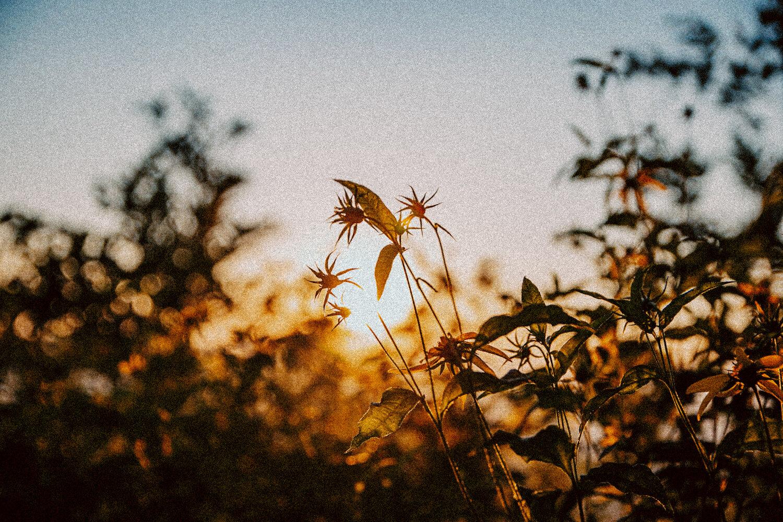 Ravens Roost_Blue Ridge Parkway_Afton_Lyndhurst_Virginia_Summer Sunset