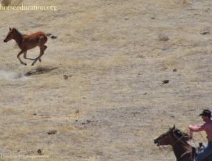 chasing foal jackson mt..jpg