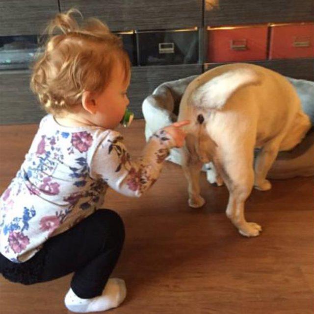 toddler pokes dog butt.jpg