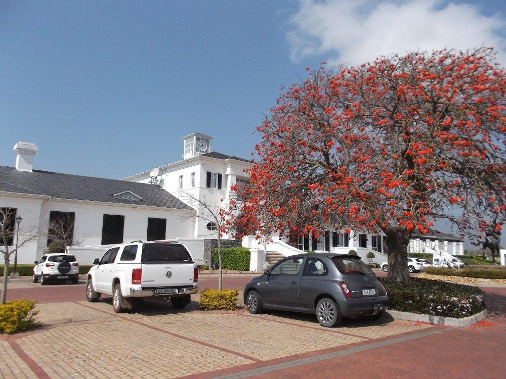 Der Korallenbaum blüht nur August bis September.