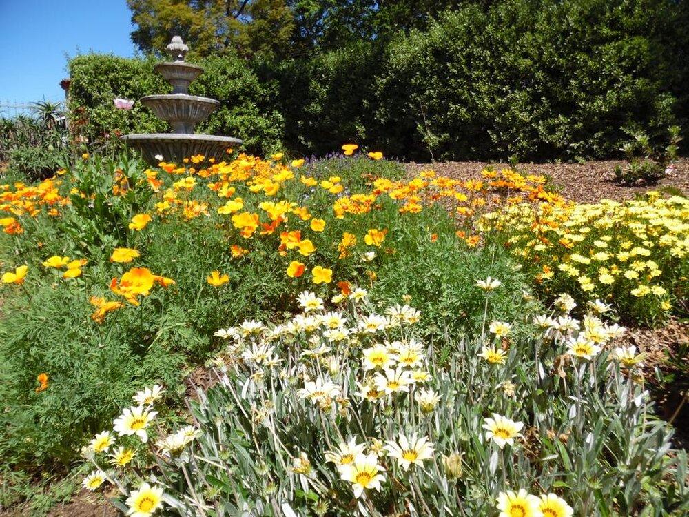 Frühlingsblumen in unserem Garten.