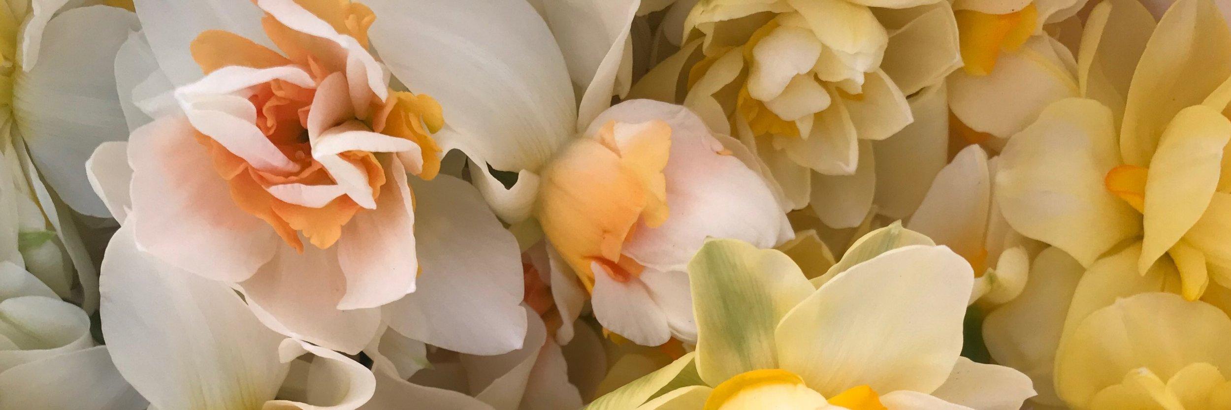Narcissus Harvest.JPG