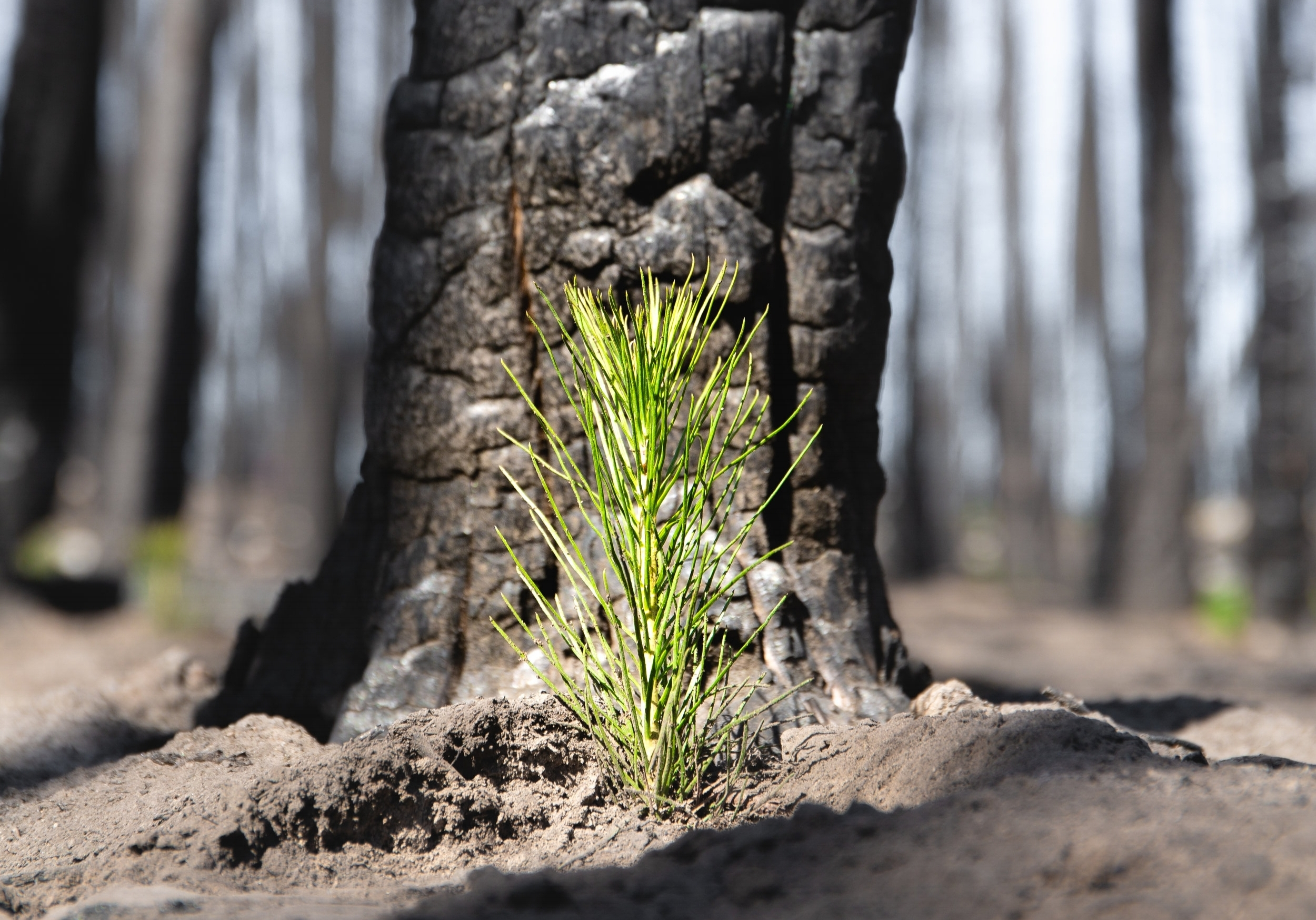 One Tree Planted023.jpg