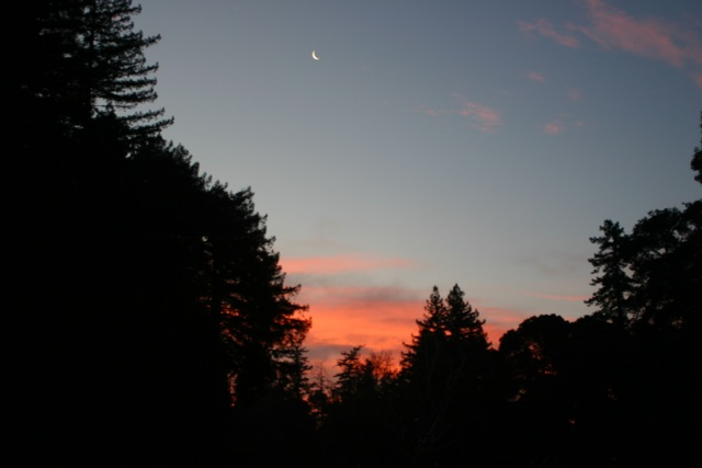 Unusual sunset here in the redwoods. Notice the sliver of the moon in the upper center of the photograph.  Photo by Molly Miligan