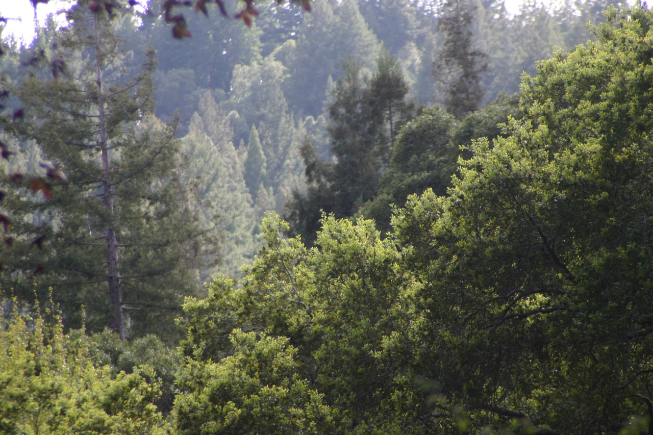 The mountains are the home of deer, bob cat, mountain lions, coyote, raccoons, fox, rabbit, quail, bluejays, butterflies, bats, skunk, hummingbirds, and so much more. It's a wild sanctuary for beautiful creatures.  Photo byMolly Milligan