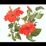 Kathy Winter painting.jpg