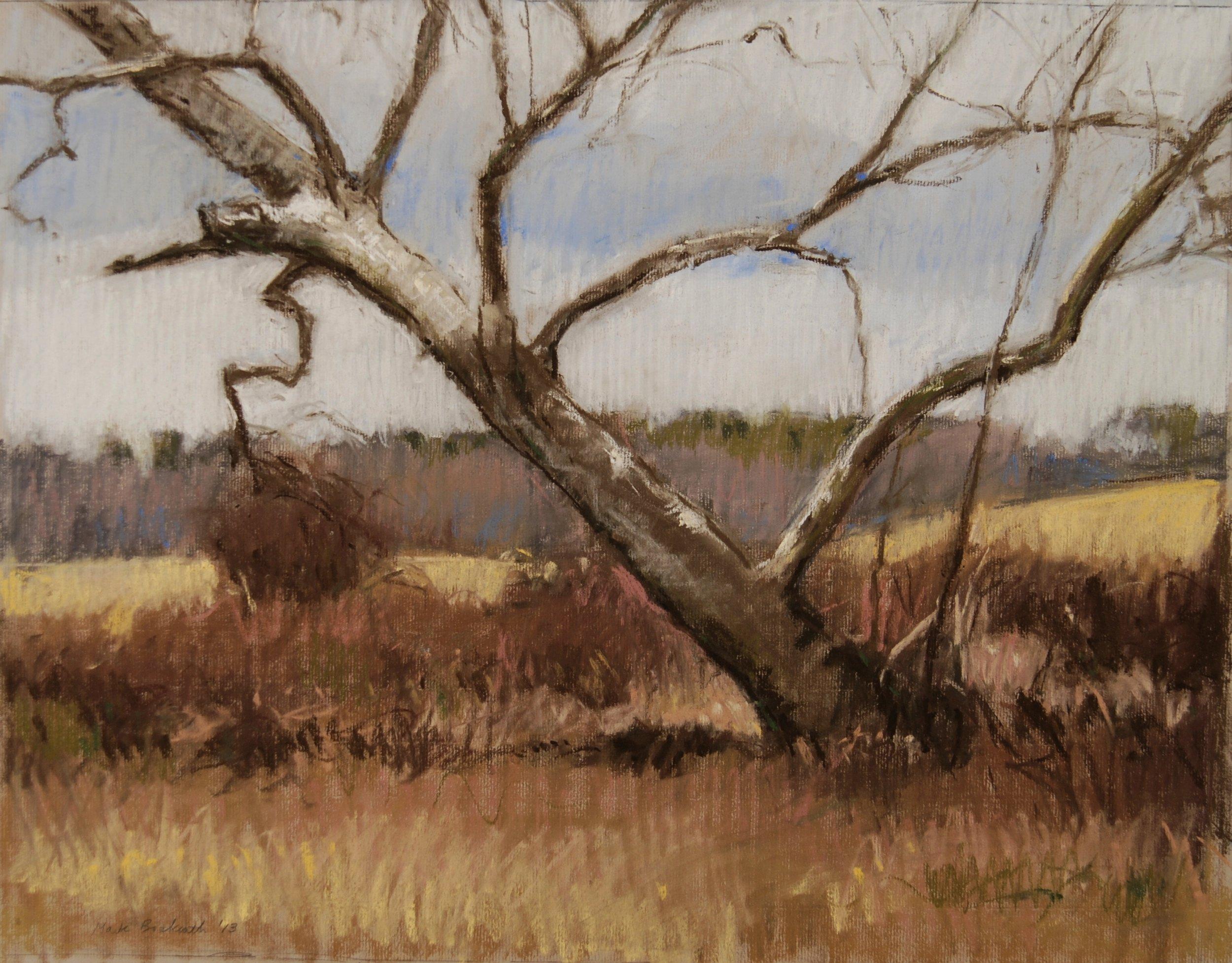 Mark Bockrath, Sycamore, pastel, 2013, 17x22.JPG
