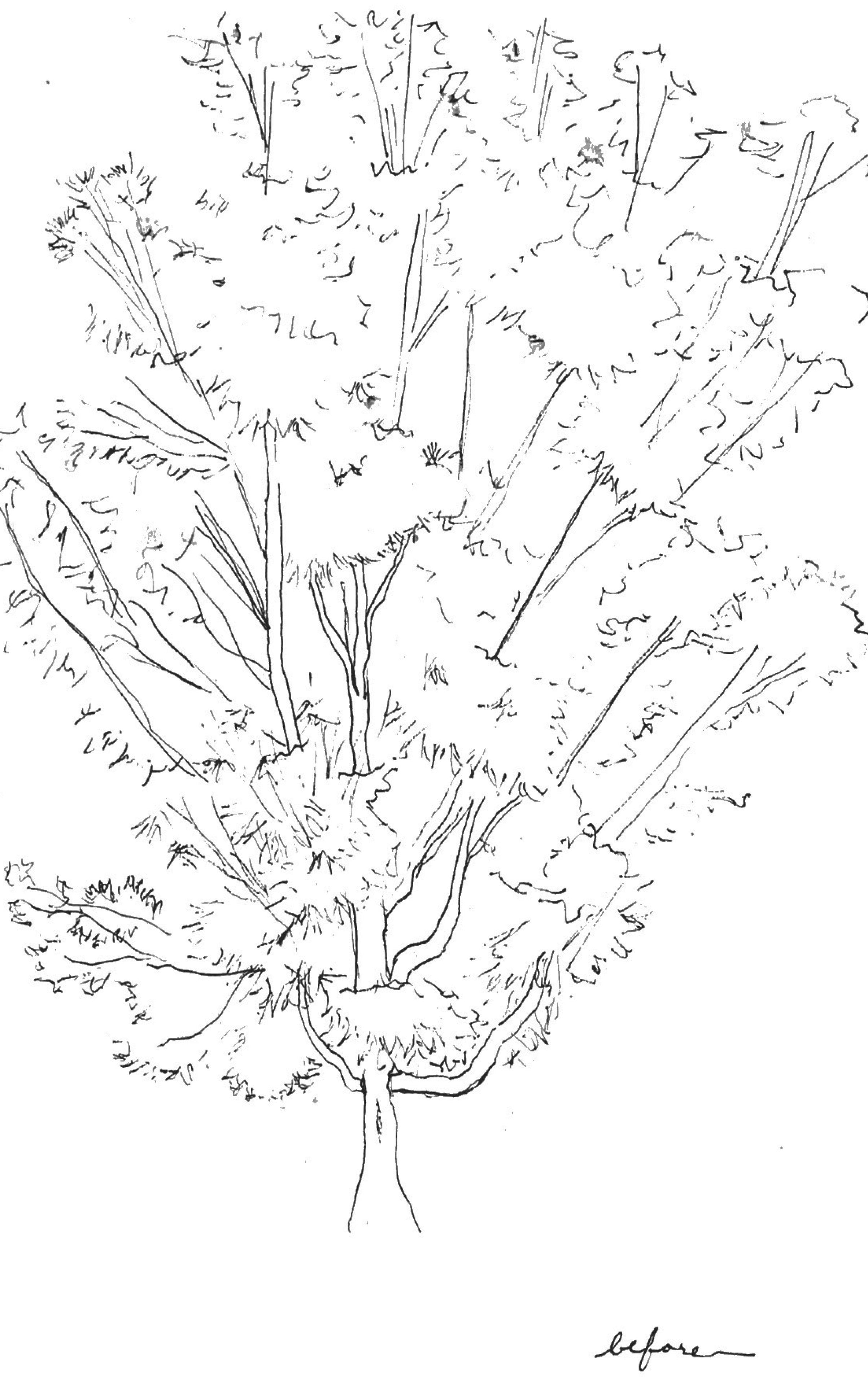 Tree_Before.jpg