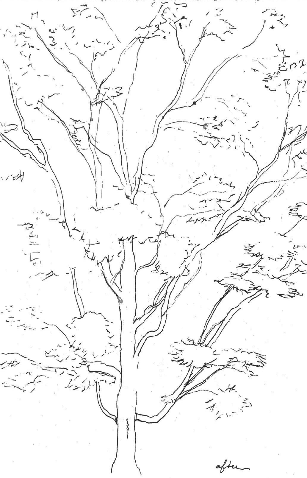 Tree_After.jpg