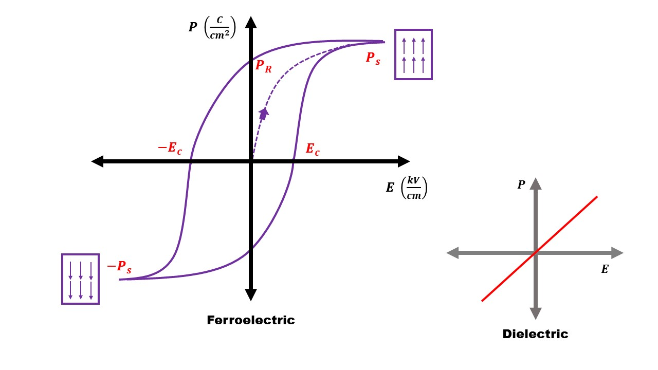 """Polarization-Electric Field (P-E) Loops of a classical ferroelectric and dielectric. Each fully saturated state represents an """"up"""" or """"down"""" domain orientation. A dielectric behaves linearly in response to an electric field, so its characteristic P-E loop is a straight line."""
