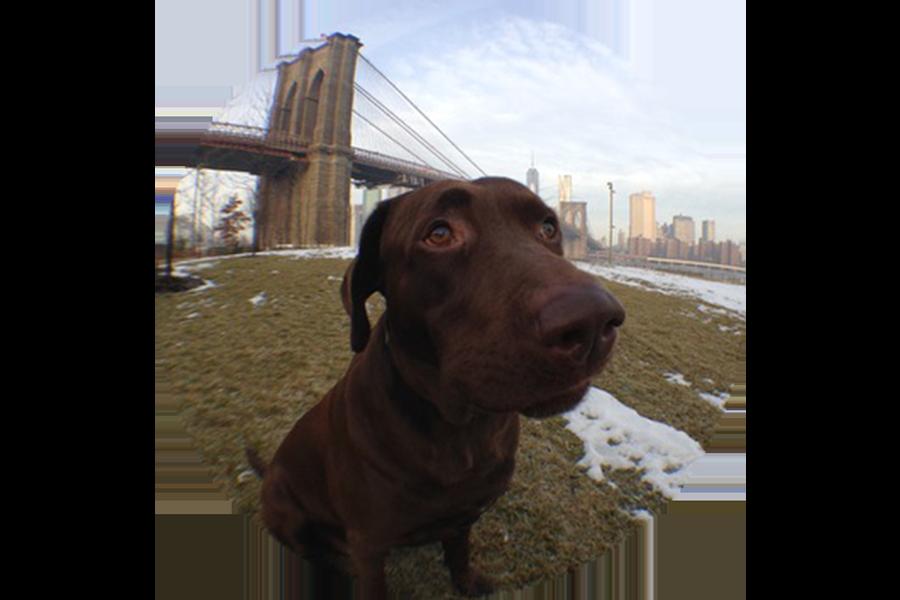 Best NYC Walking Tour