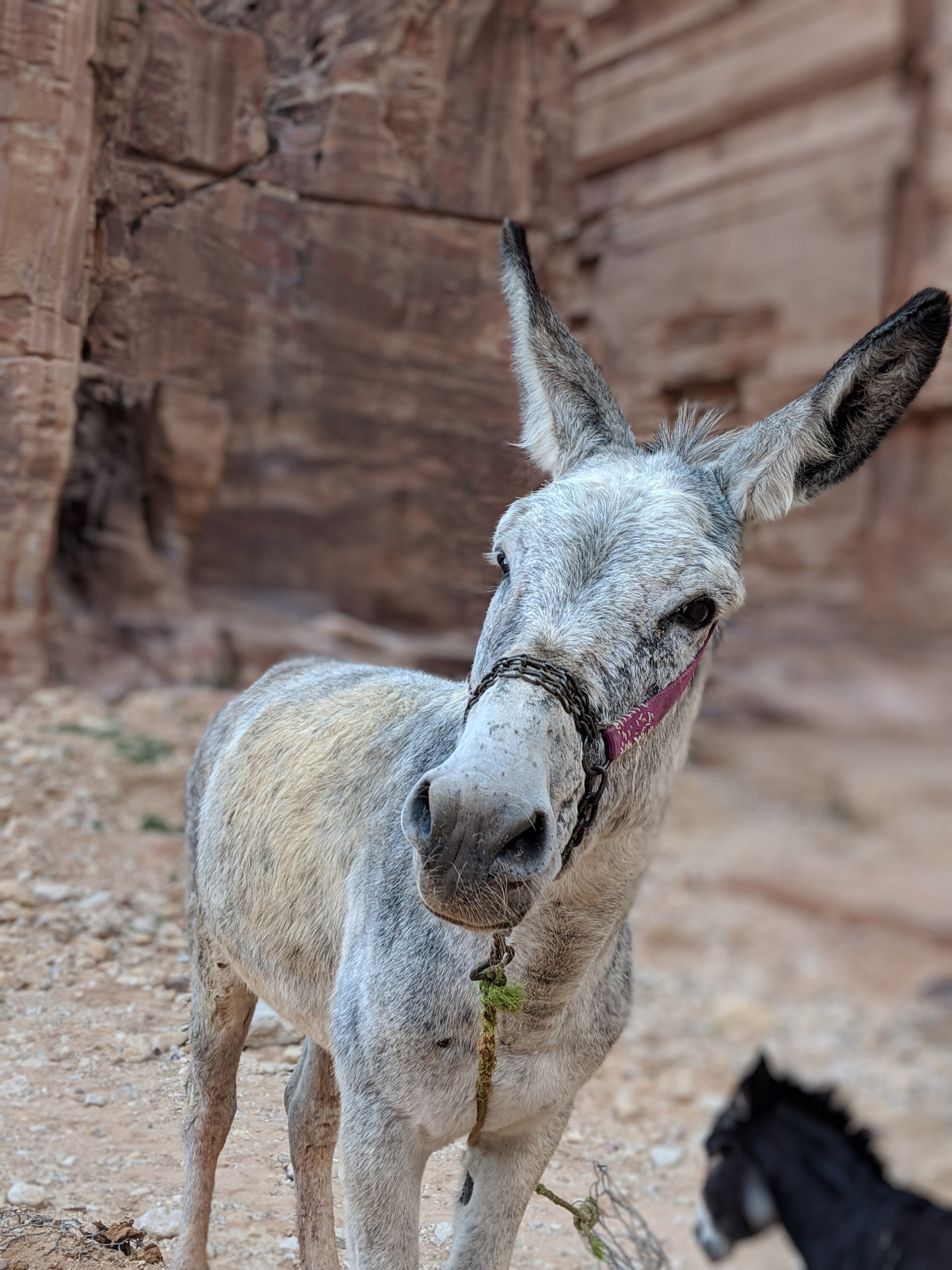 You will encounter many (friendly!) donkeys.