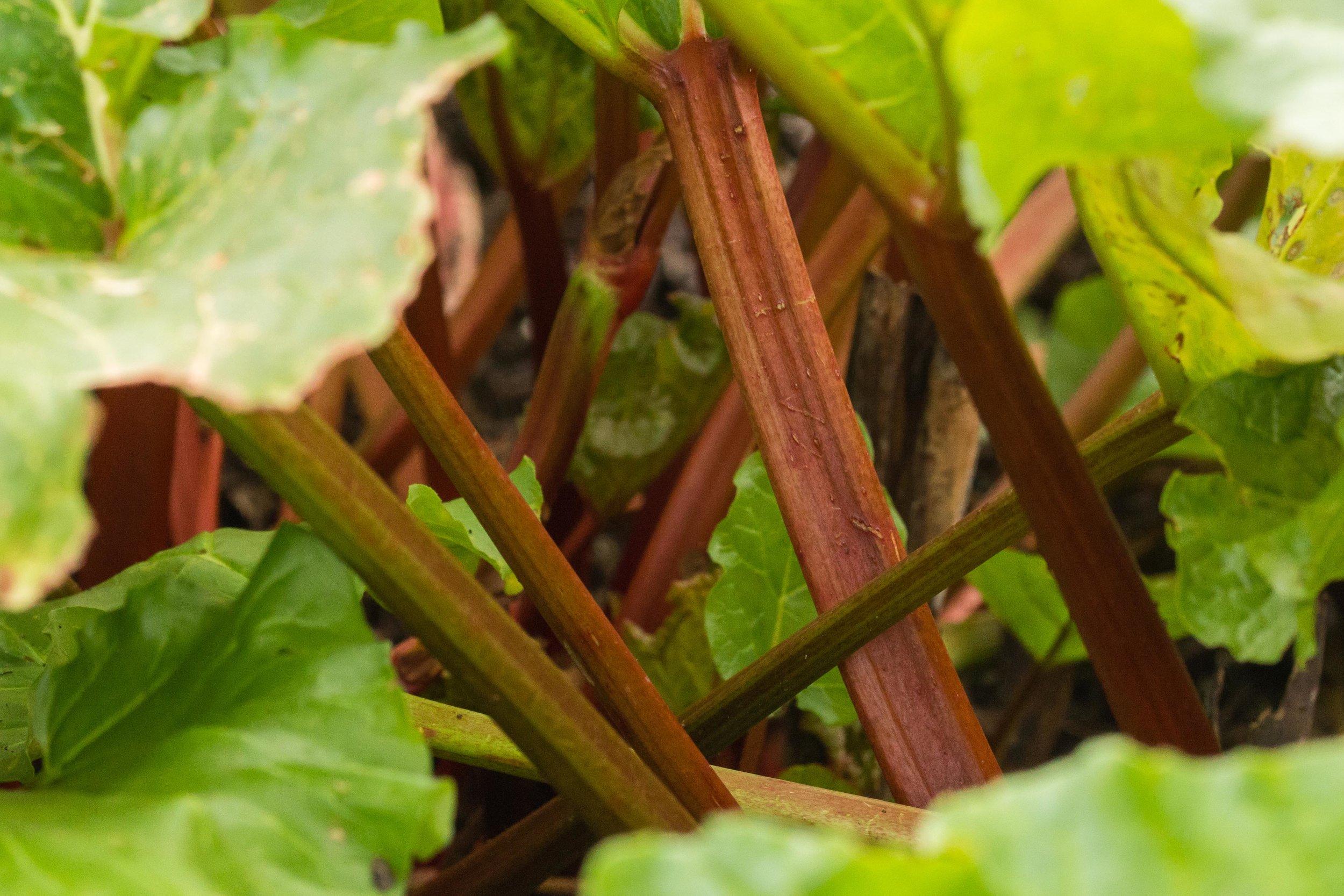 TePunaTaiao-HamiltonGardens(veg)-Highres-7390.jpg