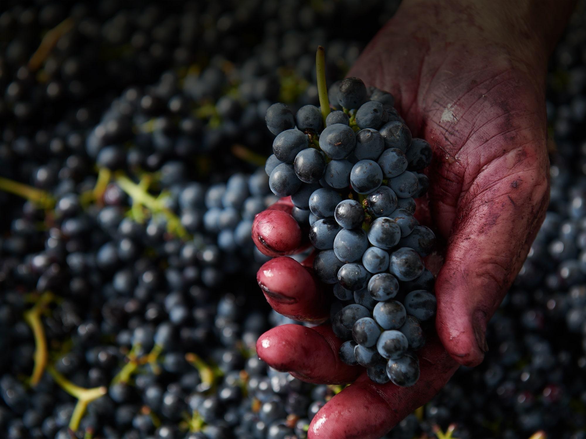 grape-hand-min.jpg
