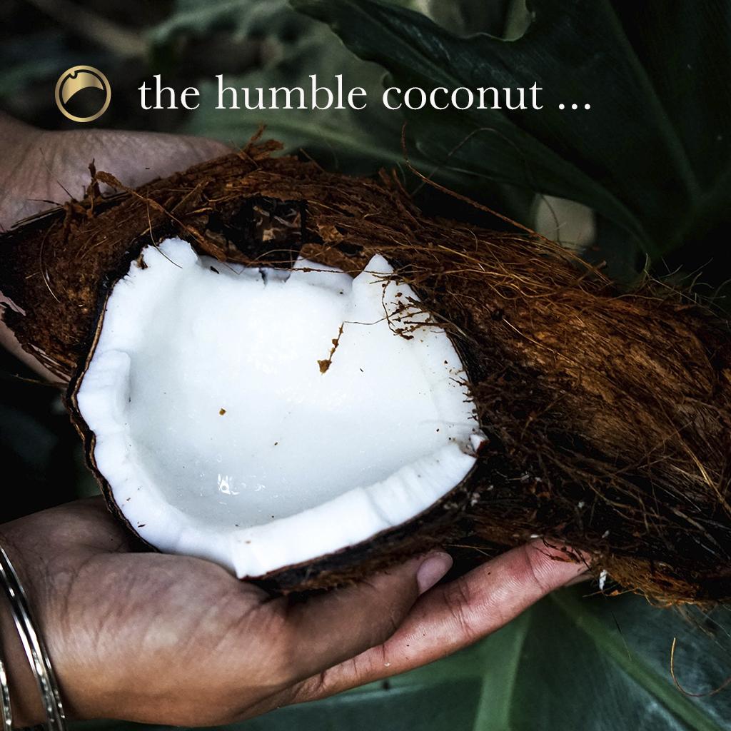 Coconut Blog 1.jpg
