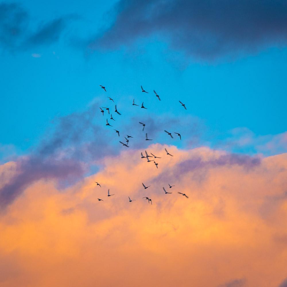 birdsflying1_.jpg