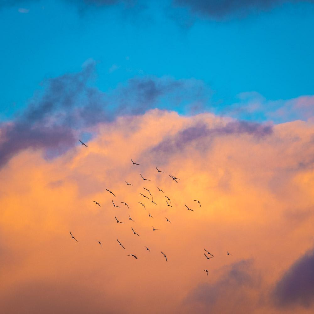 birdsflying2_.jpg